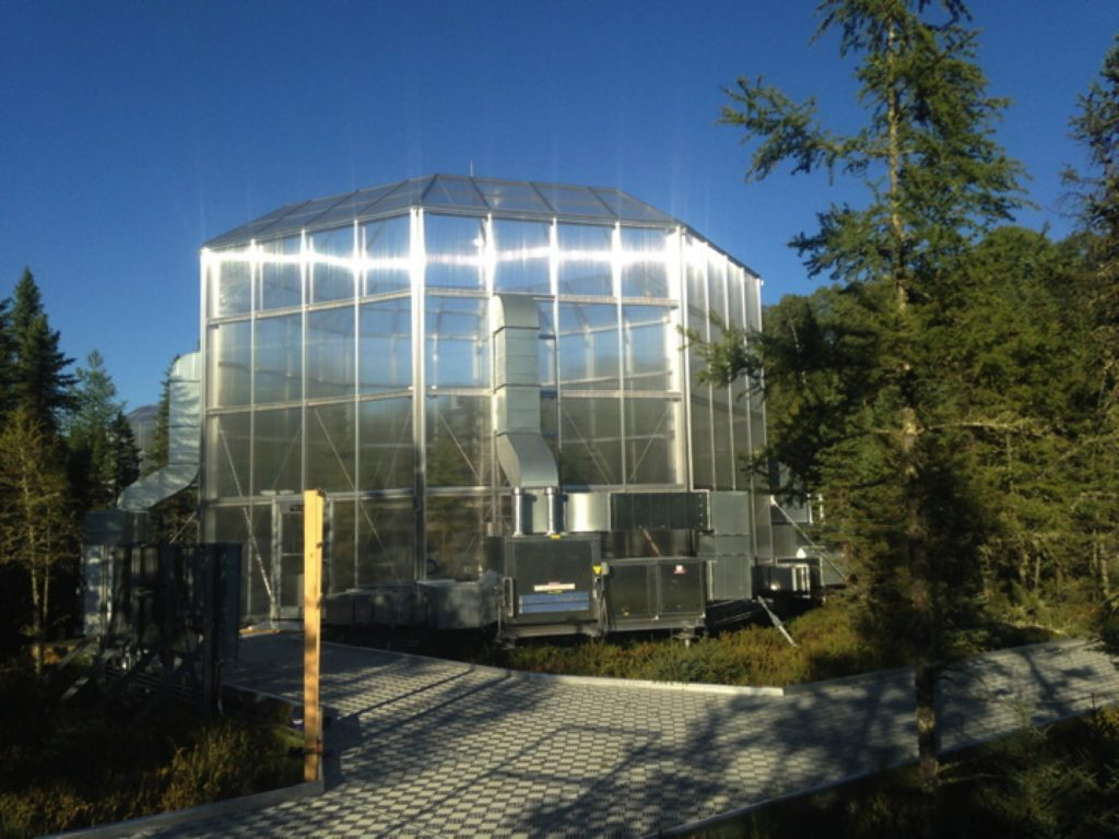 Outside SPRUCE experimental chamber